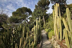 Cactus garden Villa Ephrussi de Rothschild